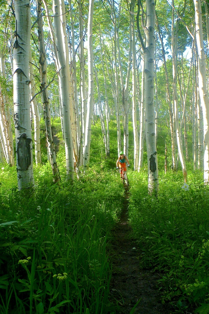 Andrea pinned through the aspen forest on Hay Park